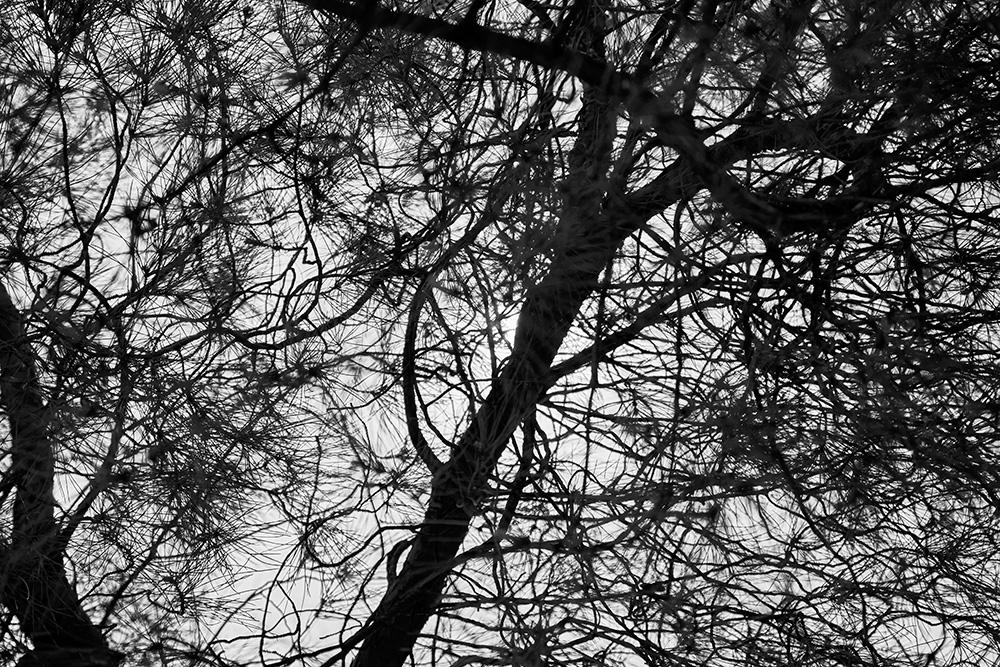 Tainoko-studio-Shizen-brunches-1-Horno-Virtual-Gallery-galeria-arte-fotografia-artistica-decorativa-decoracion-art-arboles-trees