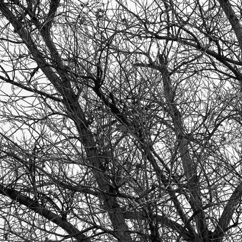 Tainoko-studio-Shizen-brunches-2-Horno-Virtual-Gallery-galeria-arte-fotografia-artistica-decorativa-decoracion-art-arboles-trees