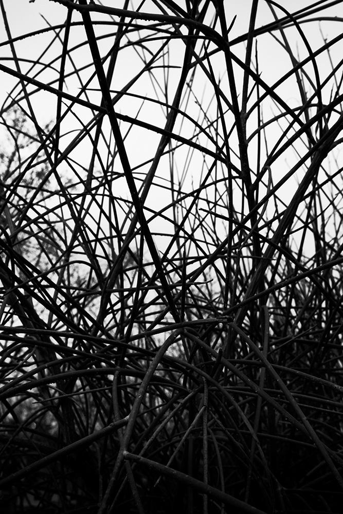 Tainoko-studio-Shizen-brunches-3-Horno-Virtual-Gallery-galeria-arte-fotografia-artistica-decorativa-decoracion-art-arboles-trees