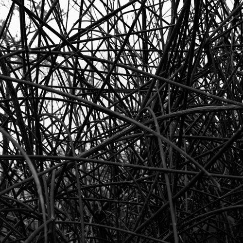 Tainoko-studio-Shizen-brunches-4-Horno-Virtual-Gallery-galeria-arte-fotografia-artistica-decorativa-decoracion-art-arboles-trees