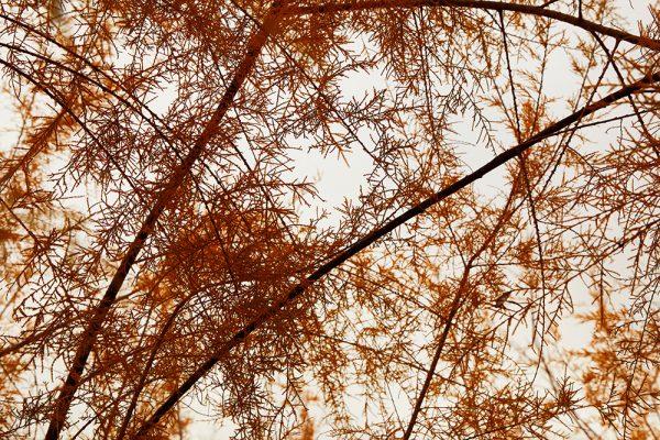 Tainoko-studio-Shizen-brunches-color-Horno-Virtual-Gallery-galeria-arte-fotografia-artistica-decorativa-decoracion-art-arboles-trees