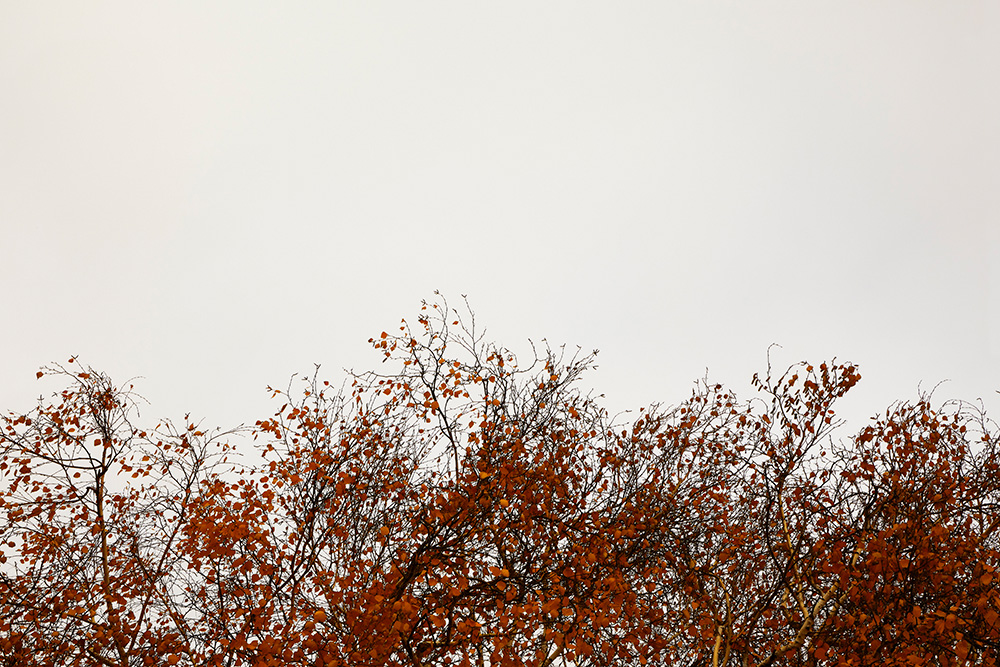 Tainoko-studio-Shizen-color-landscape-Horno-Virtual-Gallery-galeria-arte-fotografia-artistica-decorativa-decoracion-art-arboles-trees