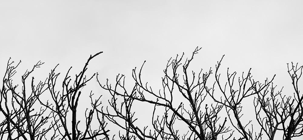 Tainoko-studio-Shizen-landscape-Horno-Virtual-Gallery-galeria-arte-fotografia-artistica-decorativa-decoracion-art-arboles-trees