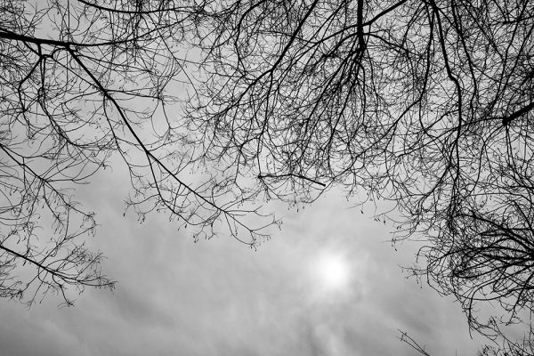 Tainoko-studio-Shizen-looking-for-the light-Horno-Virtual-Gallery-galeria-arte-fotografia-artistica-decorativa-decoracion-art-arboles-trees