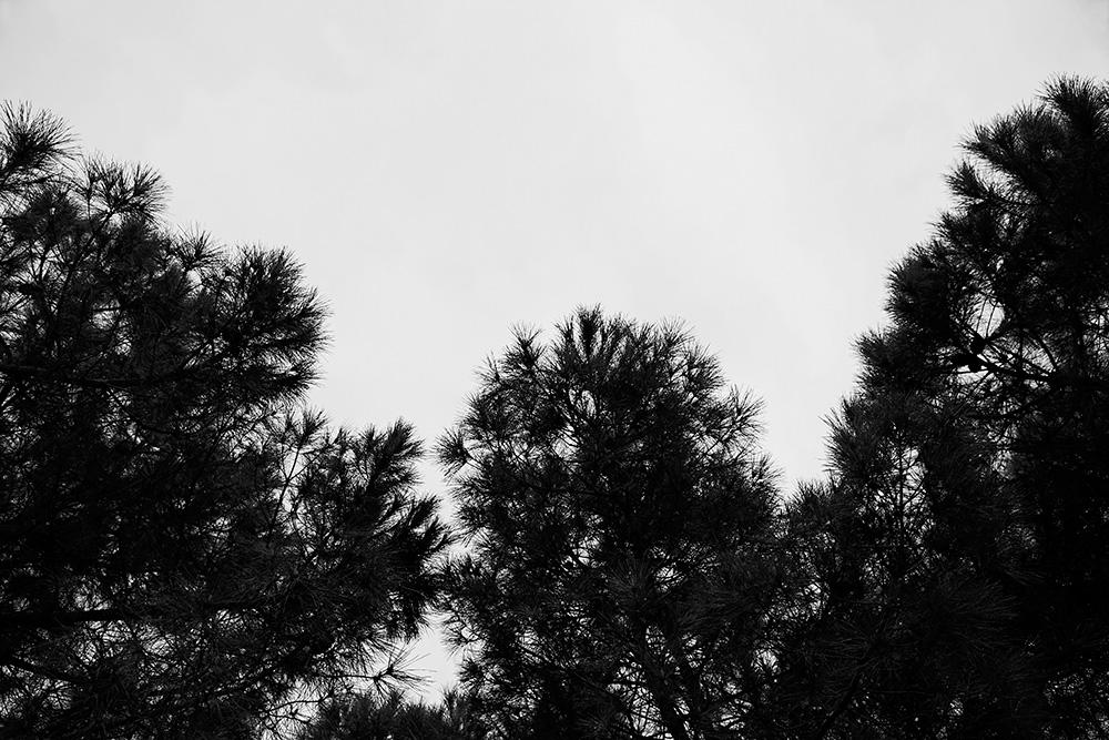 Tainoko-studio-Shizen-neirborhood-Horno-Virtual-Gallery-galeria-arte-fotografia-artistica-decorativa-decoracion-art-arboles-trees