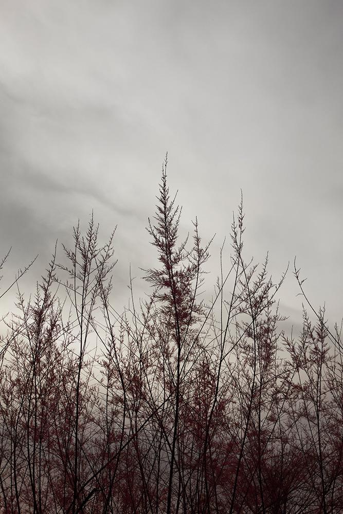 Tainoko-studio-Shizen-sunrise-Horno-Virtual-Gallery-galeria-arte-fotografia-artistica-decorativa-decoracion-art-arboles-trees