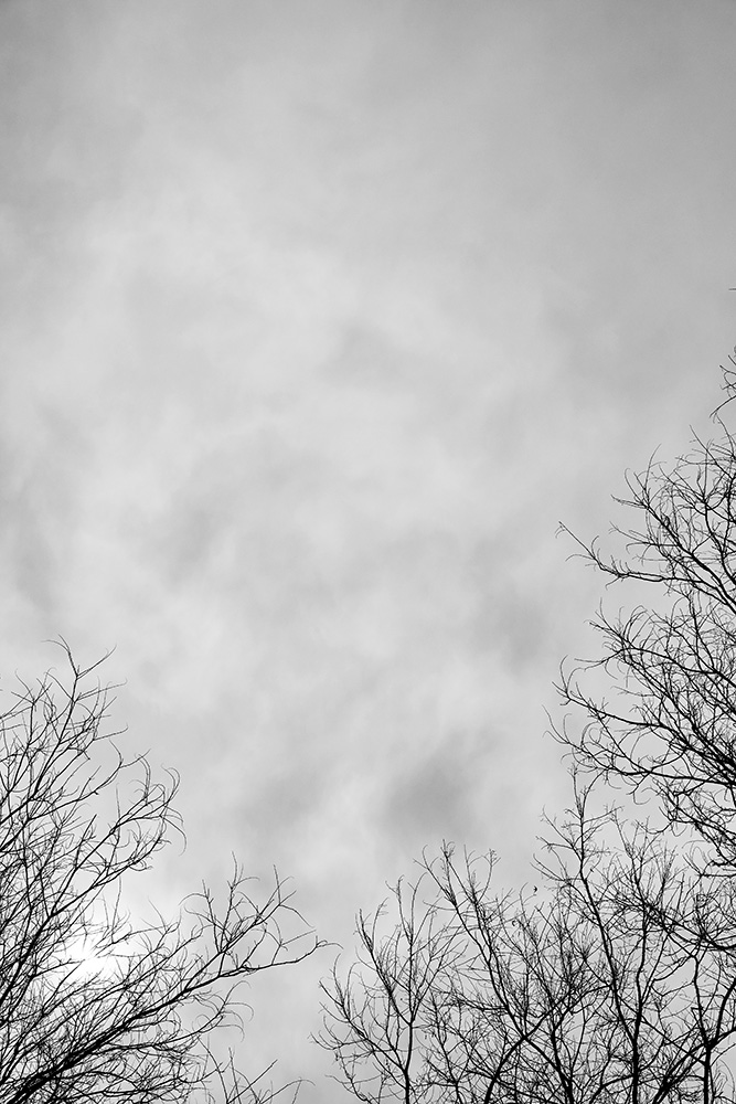 Tainoko-studio-Shizen-sunset-Horno-Virtual-Gallery-galeria-arte-fotografia-artistica-decorativa-decoracion-art-arboles-trees