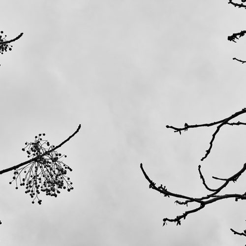 Tainoko-studio-Shizen-the-meeting-Horno-Virtual-Gallery-galeria-arte-fotografia-artistica-decorativa-decoracion-art-arboles-trees