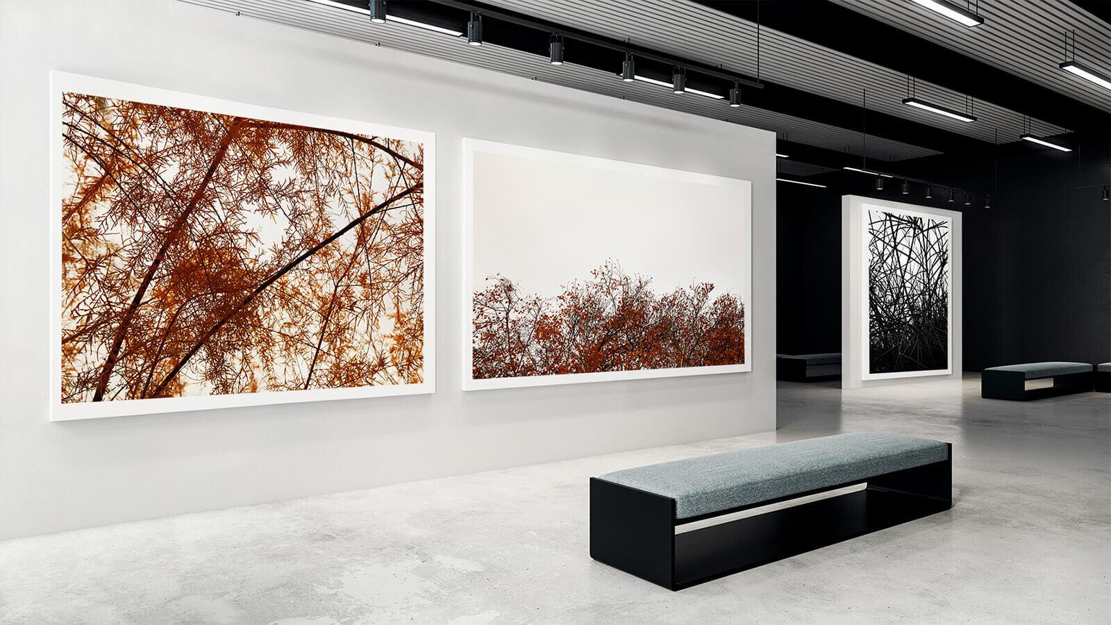 TAIYOKO-STUDIO-exposicion-Horno-Virtual-Gallery-branches-landscape-color-galeria-arte-fotografia-artistica-edicion-limitada-decoracion