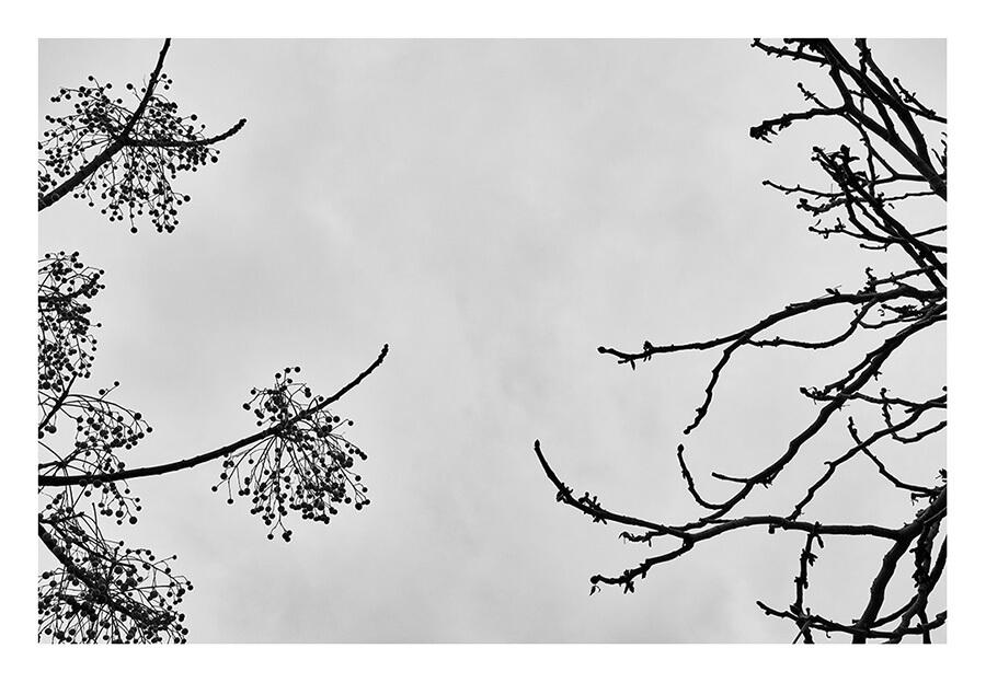 Tainoko-studio-Shizen-the-meeting-Horno-Art-Virtual-Gallery-galeria-arte-fotografia-artistica-edicion-limitada-arboles-trees-artista